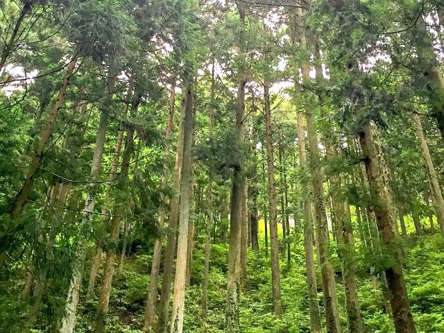 日本の杉 株式会社エムズ
